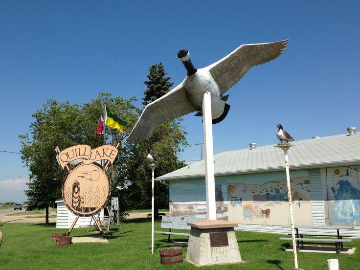 Quill Lake, Saskatchewan- Canada Goose