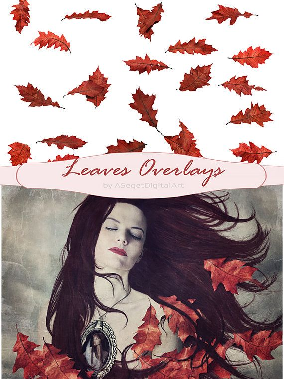Leaves Overlays, Autumn, Falling Leaves, Fall leaves, Autumn Leaf, realistic, natural look, transparent background, PNG, PSD