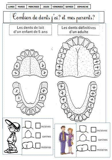 DOSSIER sur les DENTS cycle 2 | | BLOG GS CP CE1 CE2 de Monsieur Mathieude Monsieur Mathieu NDL