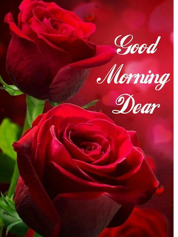 Pin by Brenda Roller on Good Mornings | Good morning roses