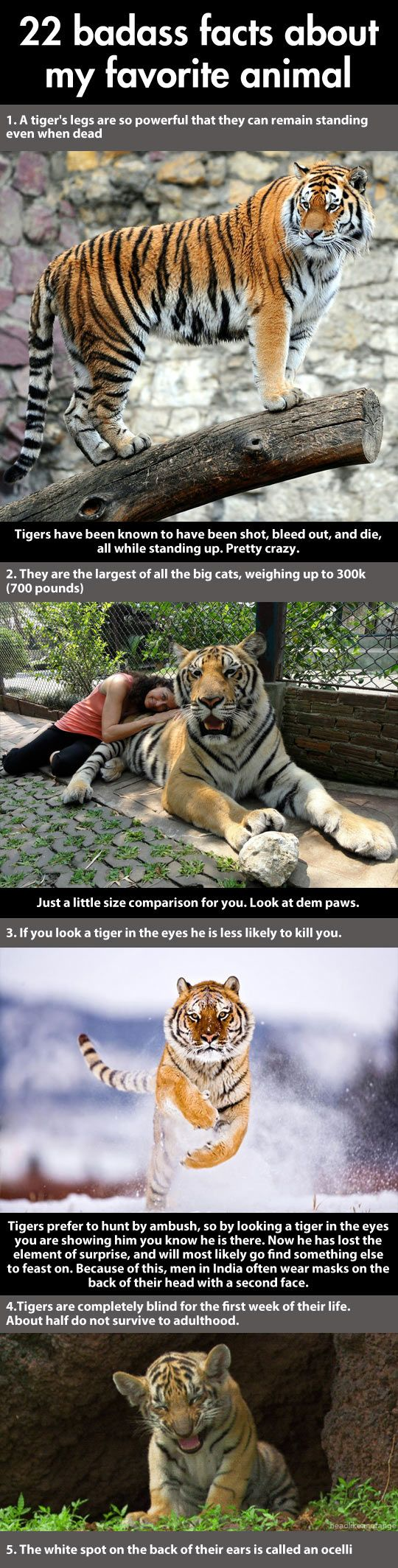 It says there are more tigers in captivity in the US then there are left in the wild... that's sad