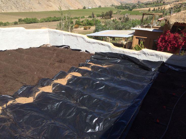 Plantando el techo de Casa Rama en Elquimista con una huerta Pro-Organic