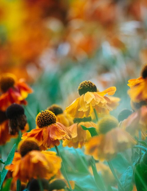 1000 images about Flowers on Pinterest