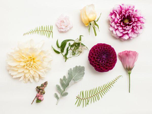 Blumenfuhrer Von Violet Und Verde Blumenfuhrer Verde Violet Bedeutung Von Blumen Blumen Winter Hochzeit Blumen