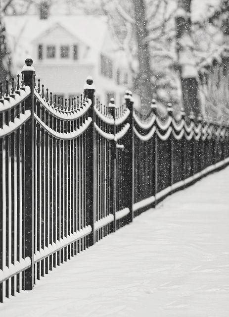 frosty fence: Irons Fence, Iron Fences, Beautiful, Winter Wonderland, White Christmas, Snow Art, Wrought Irons, Photography