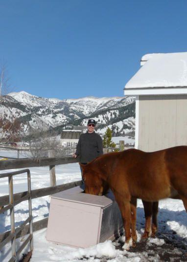 Best 25 Horse Water Trough Ideas On Pinterest Cattle