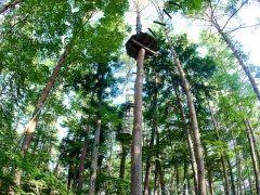 夏休みは海もいいですが山の中で思いっきり身体を動かすのもいいものですよ 兵庫県豊岡市にある森の中の樹木をそのまま利用して造られた自然共生型アスレチック 空中散歩やロープ渡りをしてみたりジップラインでターザン気分を味わったりできます 子どもはもちろん日頃運動不足ぎみの大人にもおすすめですよ  #兵庫 #アスレチック #ジップライン #レジャー tags[兵庫県]