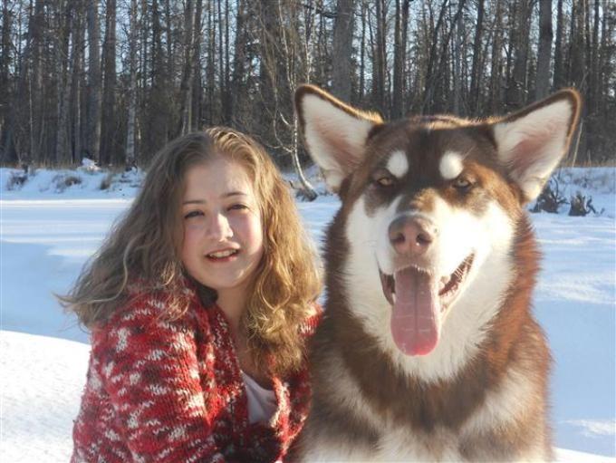 red giant alaskan malamute wolf - photo #28