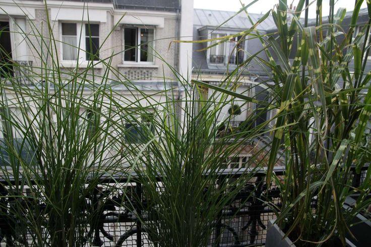 Appartement Terrasse, balcon, veranda Oriental Noir Vert Arbres, fleurs et plantes Pots, bacs et jardinières Portail, grillage, cloture Détail Paris Appartement Style Indien