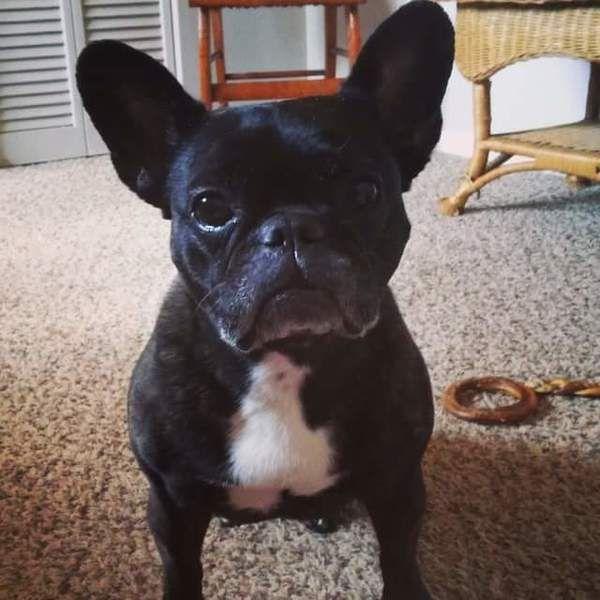 17 best images about redbarn natural dog chews on pinterest for dogs antle. Black Bedroom Furniture Sets. Home Design Ideas