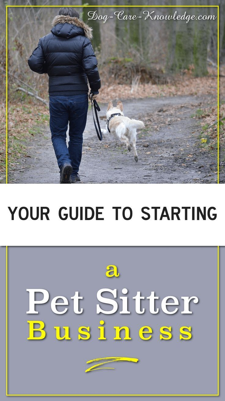 Pet Sitter Business How To Start One