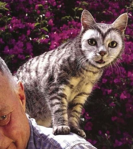 cat heart | Light Bright Cats: Heart Face Cat