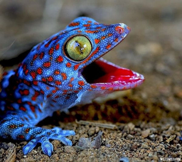 Amazing Colorful Chamilions: Colorful Lizard (60 Images)