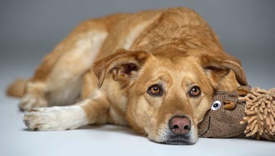 Co robić, gdy pies ma niedowagę?   http://www.kakadu.pl/Zdrowie-psow/co-robi-gdy-pies-ma-niedowag.html