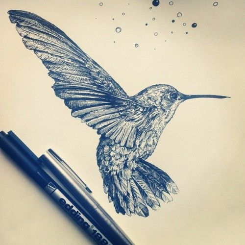 Pen drawing of a humming bird
