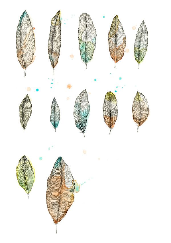 trine struwe: the feather studies  (pen, pencil, crayons and watercolour on paper)