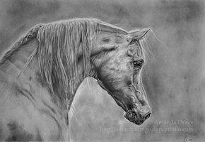 deviantART: More Like Arabian Stallion by ~Oceansoul84