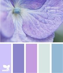hydrangea blues. darling.