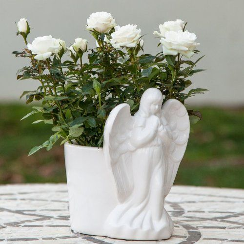 White Mini Rose in Praying Angel Container - Sympathy Plant - Sympathy Gift - Gift for religious person Live Plant Gift - Ships fast via EXPRESS DELIVERY