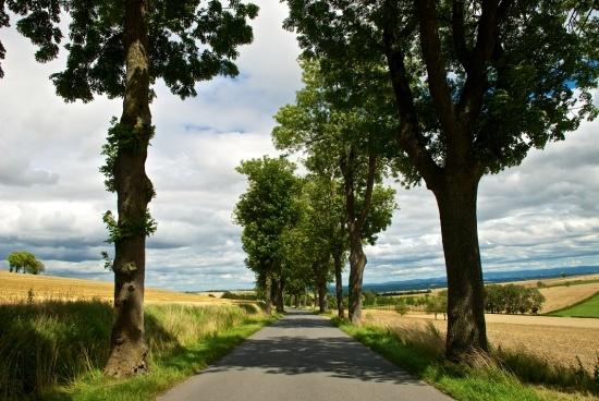 The Road to Gannat