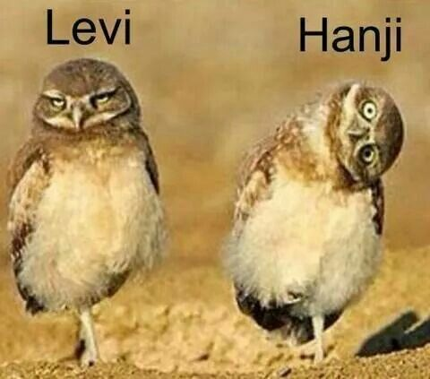 Levi and Hanji xD This is it. This is literally Levihan. xD