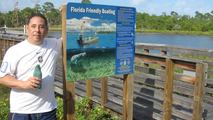 Watching the manatees Jupiter Florida