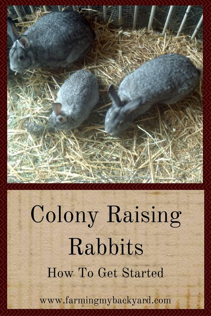 645 best rabbits images on pinterest raising rabbits goat care