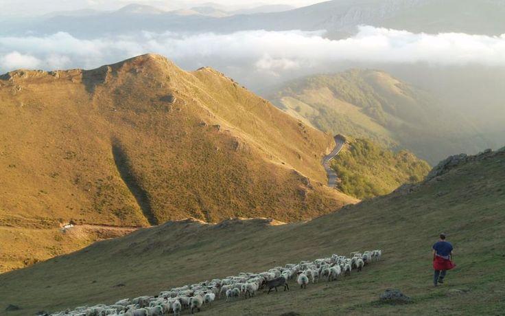 Ferme Peotenia - Balade avec un berger à Iraty à Saint-Jean-le-Vieux (64) - Activités