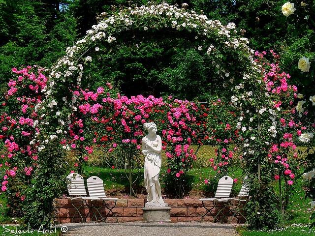 rose garden baden baden germany black forest region in baden germany pinterest gardens. Black Bedroom Furniture Sets. Home Design Ideas