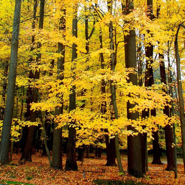 fall colors at Jockey Hollow
