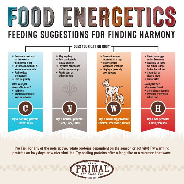 Food Energetics Suggestions For Finding Harmony Animal