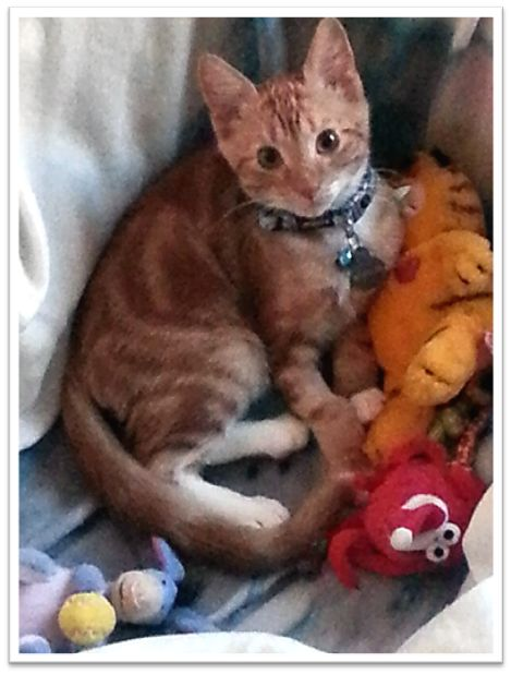 I love my Garfield Mommy!
