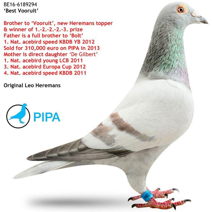 Best Vooruit | PIPA