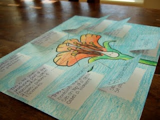 Flower parts foldable via The Inspired Classroom
