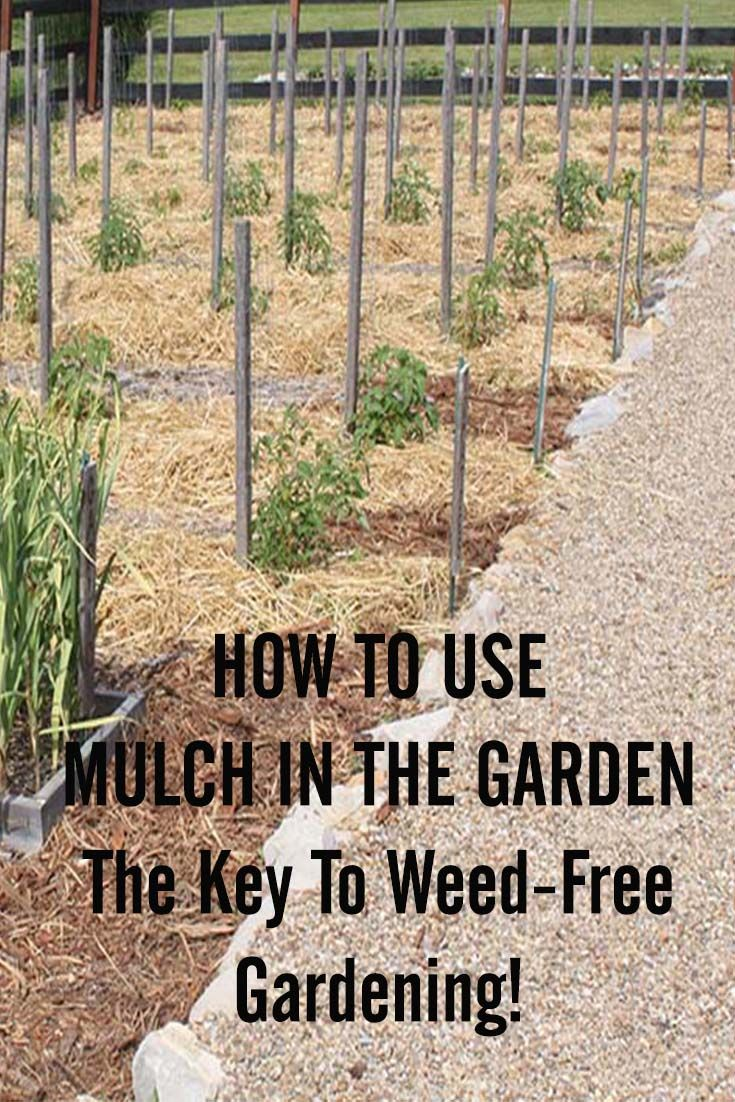 Garden Mulch Ideas beautiful front yard landscaping beautiful front yard landscaping ideas How To Use Mulch In The Garden The Secret To Weed Free Success