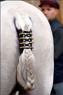 Lipizzan at the Spanish Riding School with elaborate braided tail, a safety feature for horses performing the capriole