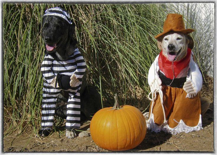 funny halloween customs - Funniest Halloween Pictures