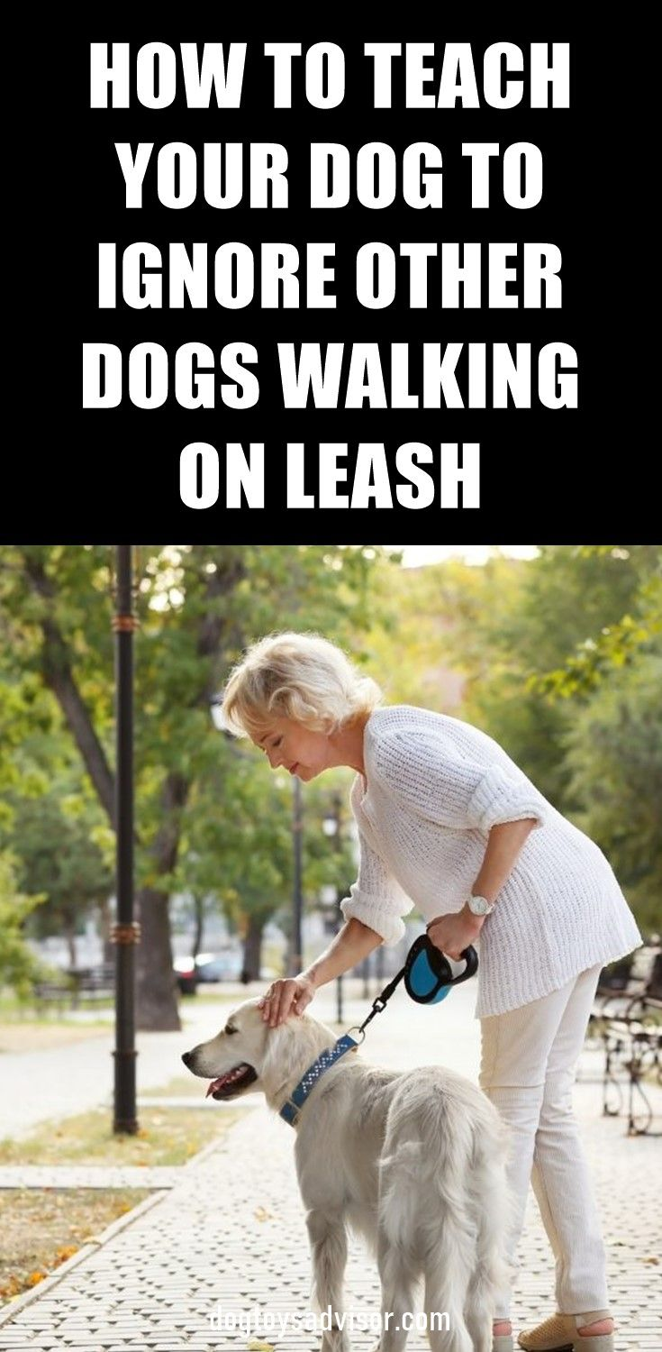 On Leash Some Dogs Feel Trapped And They Lunge And Bark At Other