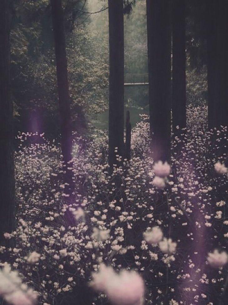 Conte-de-fée, forêt enchanté