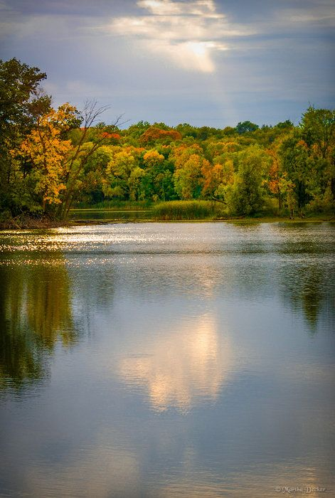 Pike Lake Gold by Martha Decker on Capture Minnesota // Sky and trees reflecting on Pike Lake in Prior Lake, Minnesota.