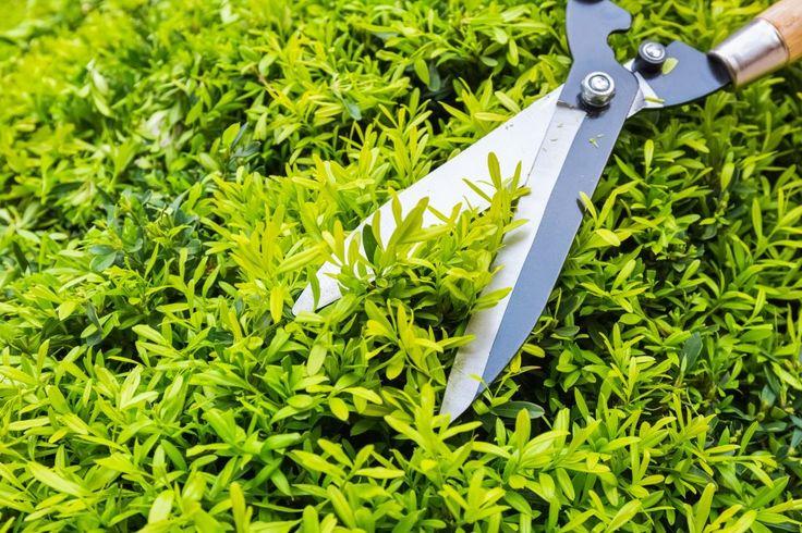 Enhancing Your Home S Outdoor Appeal Garden Tree