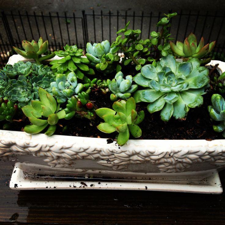 Succulent garden: Janbopita Gardening, Succulents Gardens, Succulent Gardens, Gardening Landscape, Container Gardening