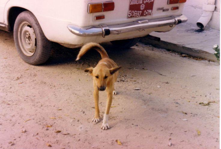 Dog, Mogadishu; foto fabiovincenti.