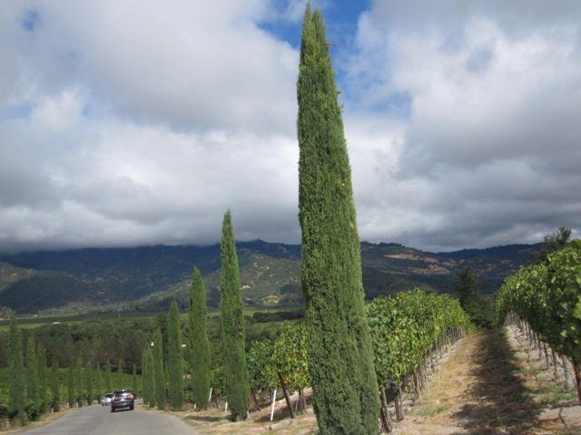 Долина Напа (Napa Valley) и Долина Сонома (Sonoma Valley) - Винный центр Калифорнии и всей Америки