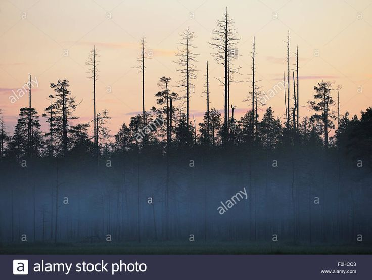 Image result for taiga mist