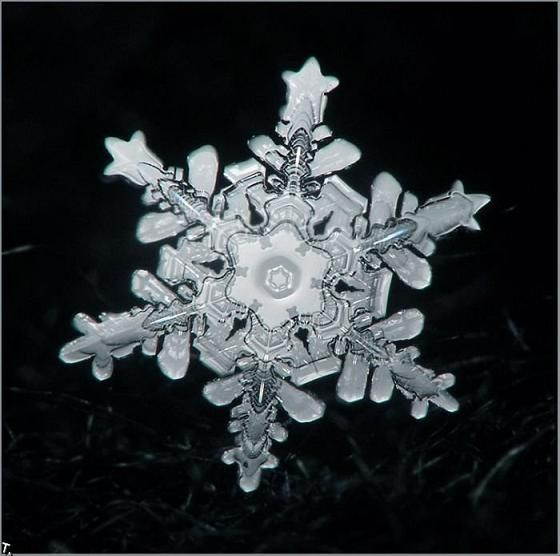 Snowflake closeup photo... couldn't be real, but it is... just amazing the detail in the smallest of places.