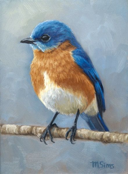 Eastern Bluebird  bird painting  Open edition by MollySimsFineArt
