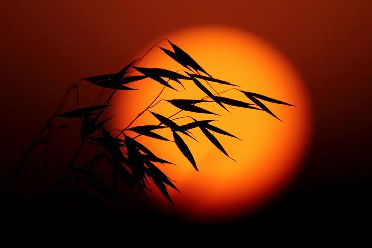 Bye Bye Spring... by Salah BaaziziBeautiful Silhoutte, Finding Beautiful, Bye Spring Sunsets, Sunsets Sunris, Puree Beautiful, Bye Bye, Visual Design, Amazing Photos, Beautiful Pict