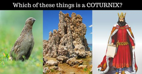 See the answer: http://wordbuff.com/ans-coturnix