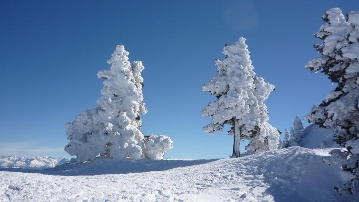 Arbres statufiés par la neige et le givre!!